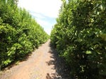 Murray Darling Citrus, Mildura, Vic 3500