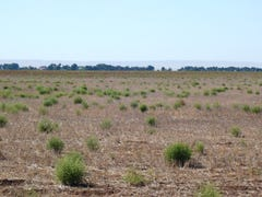 "* 308.8ha ""Andrews"" 763.18acs, Brinkworth, SA 5464"