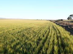 * 57.45ha Patto's 142acs, Bumbunga, SA 5520