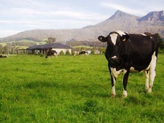 1037 Dairy Plains Road, Western Creek, Tas 7304