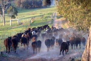 1312 Dog Rocks Road, Essington, NSW 2787