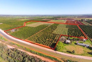 Farms 1855 &1856 Scott Road, Griffith, NSW 2680