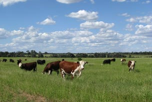 3036 ACRES TOP CLASS GRAZING PROPERTY, Condamine, Qld 4416