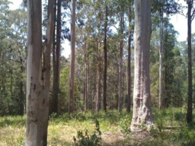 Lot 18, Tall Timber Road, Lake Innes, NSW 2446