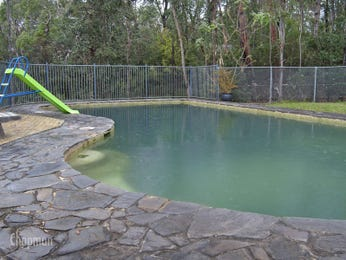 Geometric pool design using grass with glass balustrade & hedging - Pool photo 110216