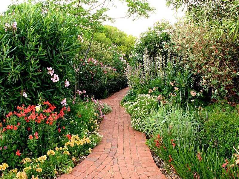 Photo of a australian native garden design from a real for Gardening australia
