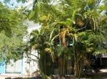 18 Camira Street, St Lucia, Qld 4067