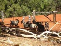 * Illewong, Cobar, NSW 2835