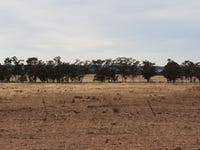 Fox Dale, Gilgandra, NSW 2827