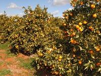 Farm 1307 Kidman Way, Tharbogang, NSW 2680