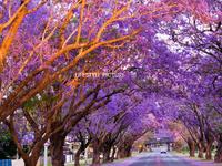 36a River side, South Grafton, NSW 2460