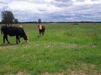 863 Kiandool Lane, Narrabri, NSW 2390