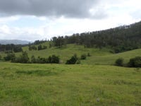 438 Deep Creek Road, Bagnoo, NSW 2446