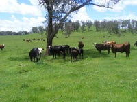 1057 Mount Slow Road, Glencoe, NSW 2365