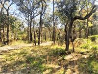 540 Bushells Ridge Road, Wyee, NSW 2259