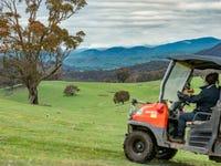 110 Tumbarumba Creek Road, Tumbarumba, NSW 2653