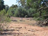 * Rosie Downs, Hermidale, NSW 2831