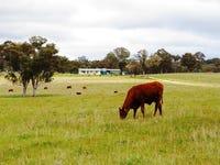 471 Watsons Creek-tilmunda Rd, Watsons Creek, NSW 2355