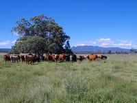 1387 Kaputar Road, Narrabri, NSW 2390