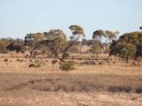 2529 Teryawynia Road, Ivanhoe, NSW 2878