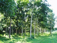 Lot 2 Middle Murray Road, Murray Upper, Qld 4854
