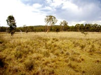 119, Tilmundra Road, Watsons Creek, NSW 2355