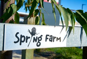 Lot 451, Limestone Avenue, Spring Farm, NSW 2570