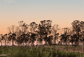 Lot 5118  Sevira Avenue, Gledswood Hills, NSW 2557