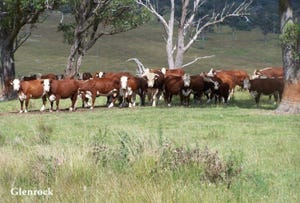 250 Sissons Rd, Aberfoyle, NSW 2350