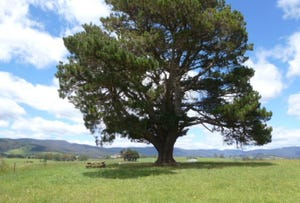 * East Maurice Road, Ringarooma, Tas 7263