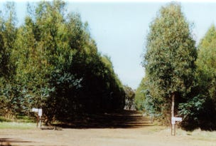 Boddington Tree Farm, 31 Marradong Road, Boddington, WA 6390