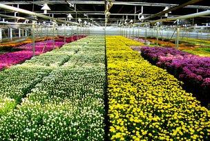 Blumberg Flowers, 83 Burtons Road, Birdwood, SA 5234