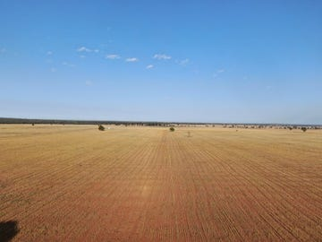 - West Wyalong Condobolin Road, West Wyalong, NSW 2671