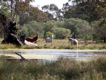 1506 Mandelsloh : Werah Creek Rd, Wee Waa, NSW 2388