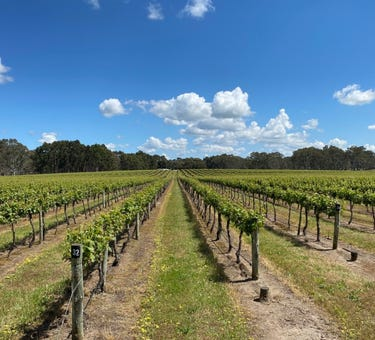 Karingal Vineyard 67 East Settlement Road, Wrattonbully, SA 5271