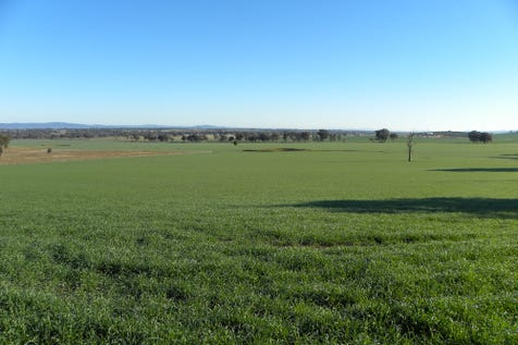 6540 LACHLAN VALLEY WAY, Cowra, 2794, Central Tablelands - Mixed Farming / SOLD BY JAMES KEADY  0427 312 402 / P.O.A