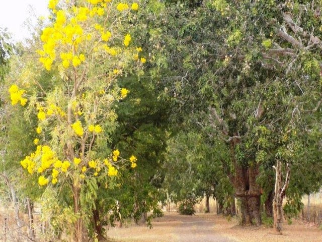 lot 13 Whitstone Road, Acacia Hills, NT 0822