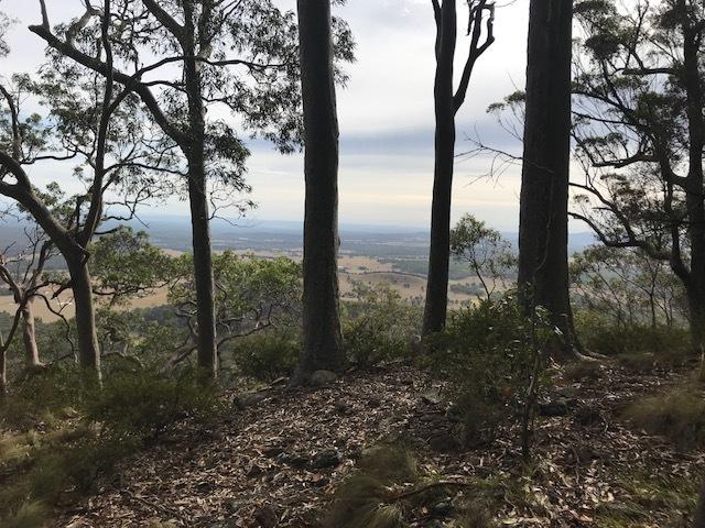 Wallaby Gully Road, Ellalong, NSW 2325