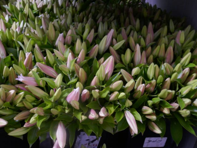 Prime Flowers, 368 Wardell Road, Alstonville, NSW 2477