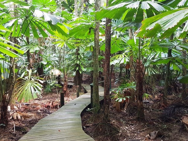 1882 Cape Tribulation Road, Daintree, Qld 4873