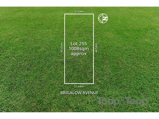 64 Brigalow Avenue, Kensington Gardens, SA 5068