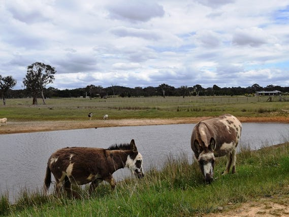 667 Mulligans Flat Road, Sutton, NSW 2620