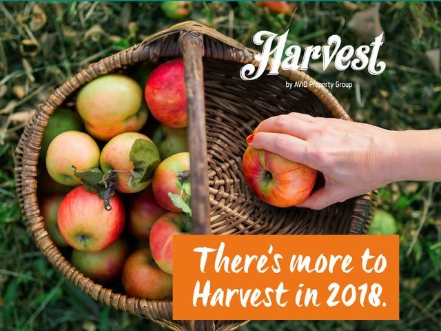 2 Harvest Boulevard (Off Raymond Terrace Road), Chisholm, NSW 2322