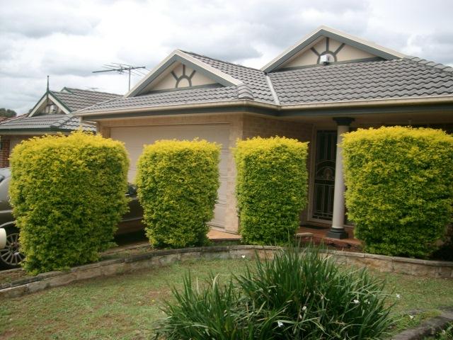 18 Sorrento Dr, Glenwood, NSW 2768