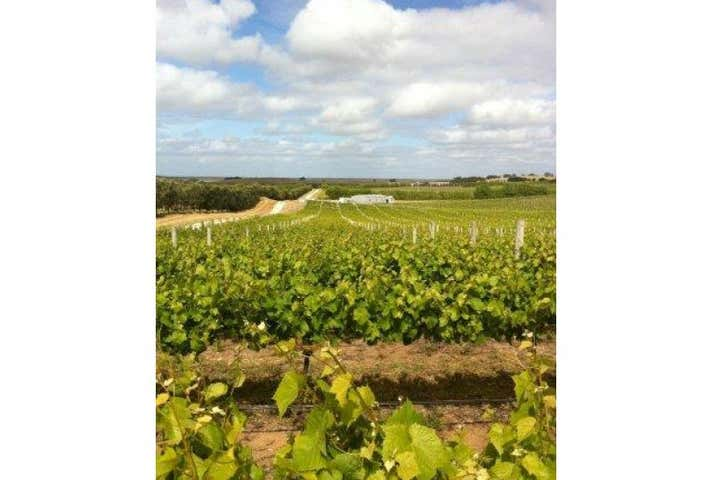 Kangaroo Hill Vineyard, Kangaroo Hill Road Robe SA 5276 - Image 1