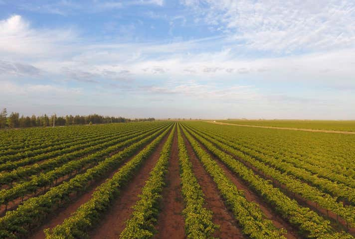 Southern Vineyards White Road Tharbogang NSW 2680 - Image 1