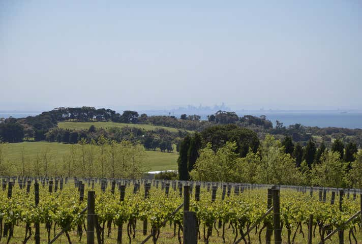 Scotchmans Hill Winery, Scotchmans & Founds Roads Drysdale VIC 3222 - Image 1
