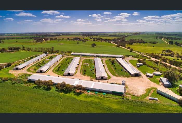 Ward Belt Farm 64 Nottle Road Ward Belt SA 5118 - Image 1