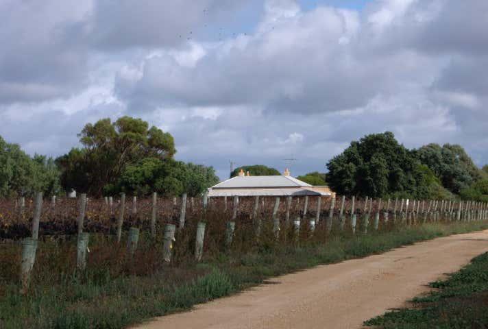 Lake Downs Vineyard, 1 Ballandown Road Langhorne Creek SA 5255 - Image 1