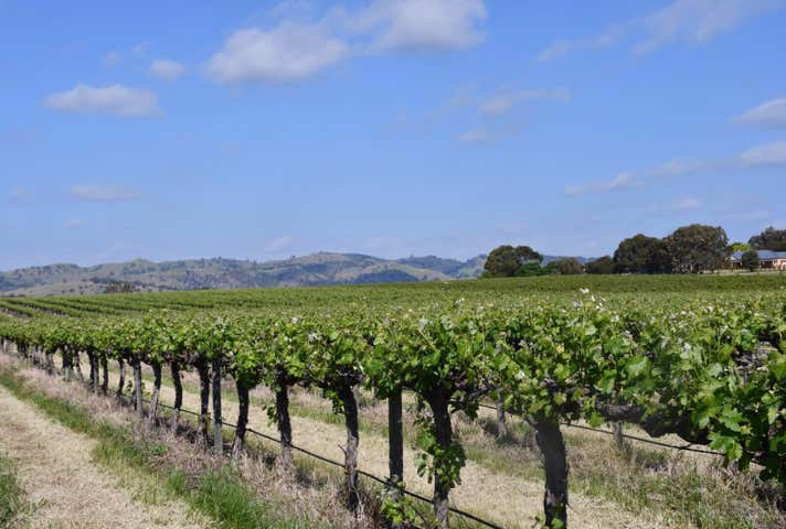 Six Gates Vineyard 1234 Barossa Valley Way Lyndoch SA 5351 - Image 1